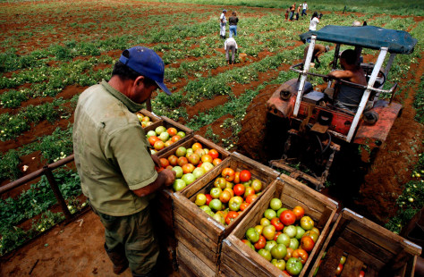 Image: Cuban farm