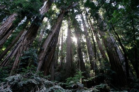 Image: Muir Woods