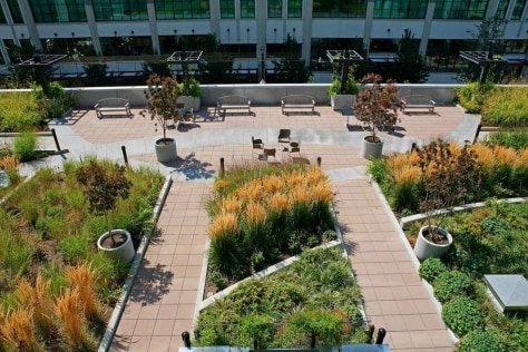 Green Roofs Popping Up In Big Cities Business Going Green Nbc News