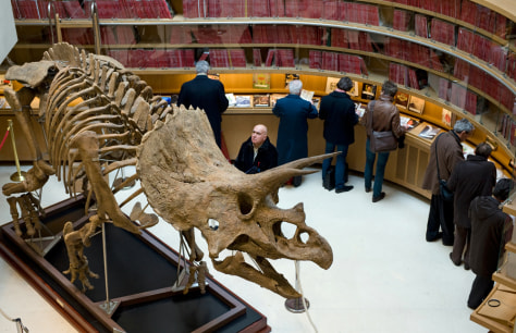 Image: Triceratops