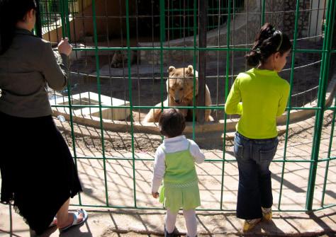 Image: Baghdad Zoo