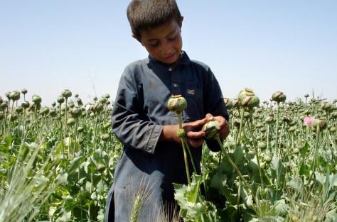 Image: Afghan opium