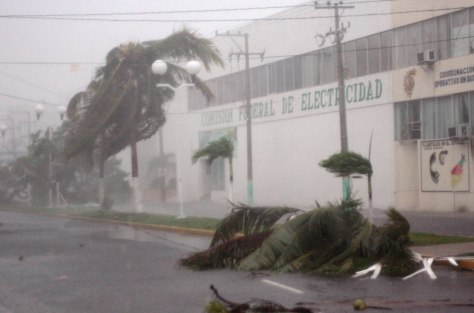 Image: A tree is blown down in Mexico during Hurricane Dean