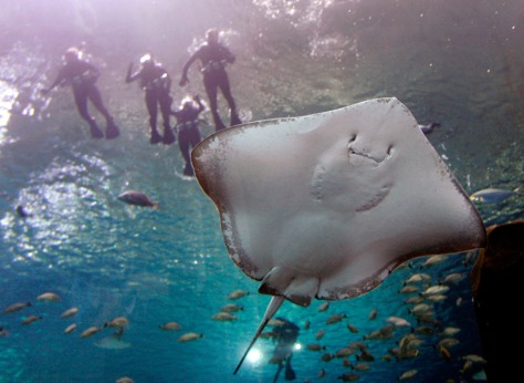 Image: People swim in the Atlanta aquarium