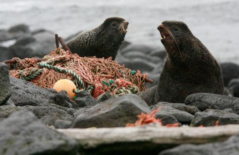 Image: Marine debris