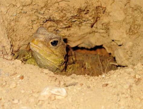 Image: Female tuatara