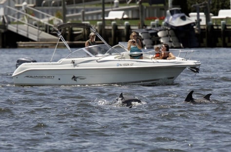Image: Dolphins swim in the Shrewsbury River in Sea Bright, N.J.