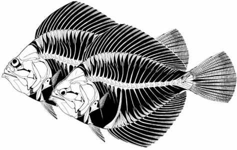 Image: Fish illustration