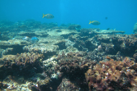 IMAGE: DEGRADED REEF