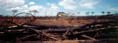 Image: Tractor clears Amazon forest