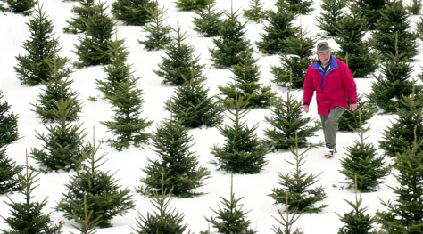 Image: Granger Tree Farm