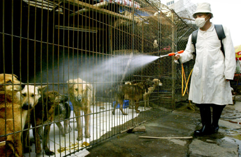 Disinfecting animal cages in Guangzhou