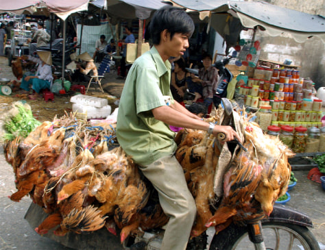 A VIETNAMESE MAN TRANSPORTS CHICKENS AT A MARKET IN HO CHI MINH CITY