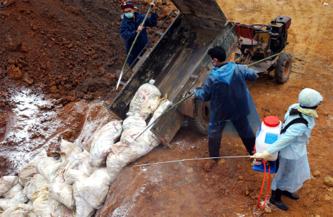 HEALTH WORKERS BURY POULTRY IN VIETNAM'S TOWN OF SON TAY
