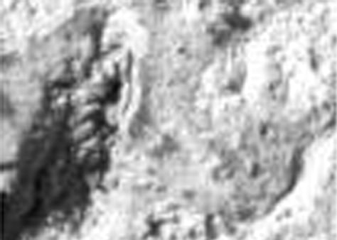 "Image: Martian ""macaroni"""