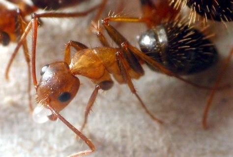 Image; Ant
