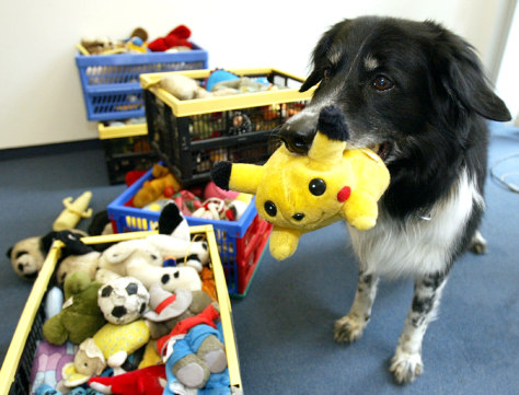 CLEVER BORDER COLLIE RICO FETCHES A POKEMON TOY IN BERLIN