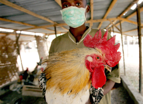 A masked man holds a rooster