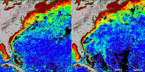 SATELLITE DATA ON PHYTOPLANKTON
