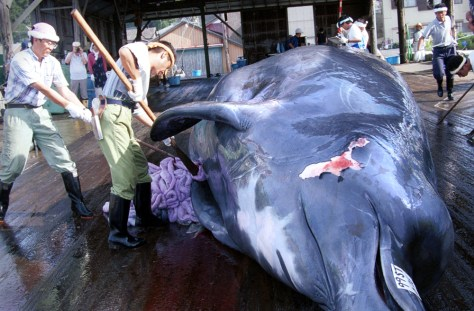 WHALE CUT UP IN TOKYO PORT