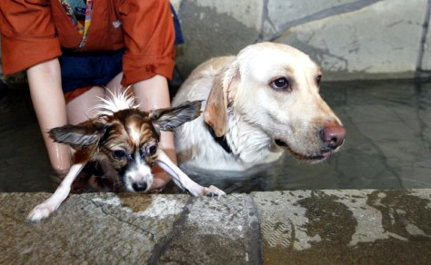 Dogs in a hot spring at Oedo Resort and Spa.