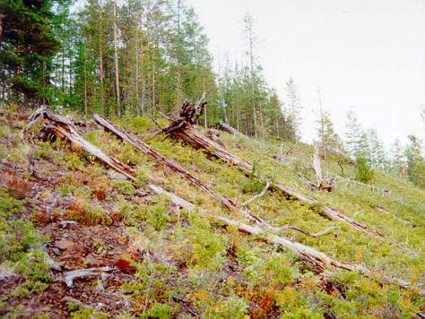 Image: Tunguska today