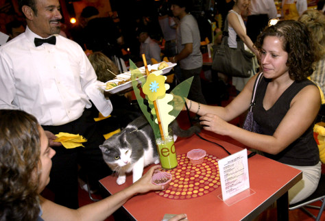 Image: Opening of Meow Mix Cafe