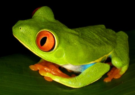 FILE PHOTO: FROG