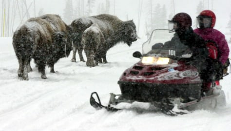 IMAGE: BISON, SNOWMOBILE IN YELLOWSTONE