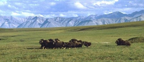 1002 AREA ARCTIC NATIONAL WILDLIFE REFUGE