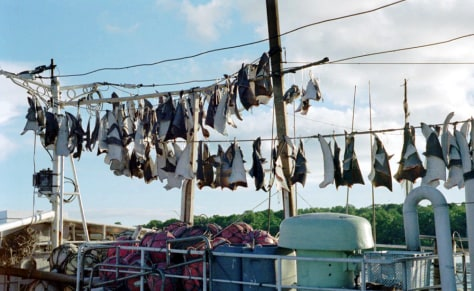 Image: Shark fins hang on boat