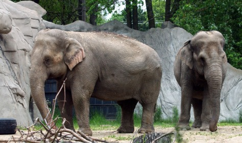 Image: Detroit Zoo elephants
