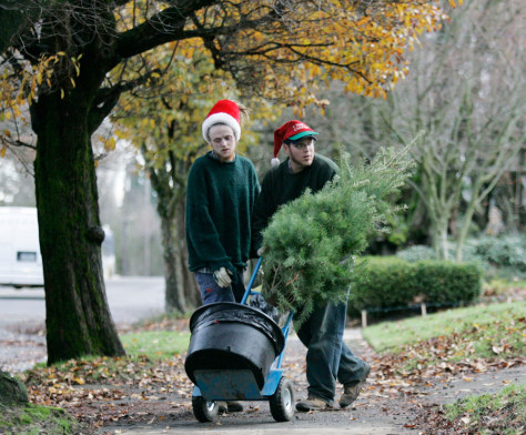 Image: Original Living Christmas Tree Company workers
