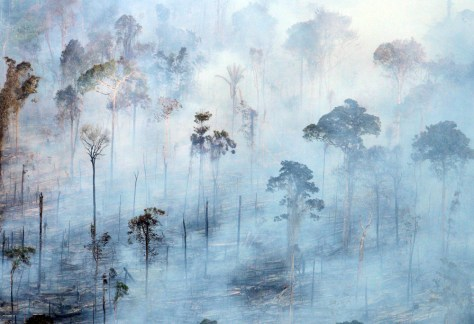 BRAZILIAN FOREST BURNS