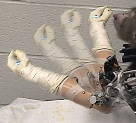 Image: Monkey and robotic arm