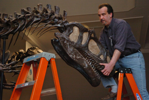 workers remove dinosaur skull