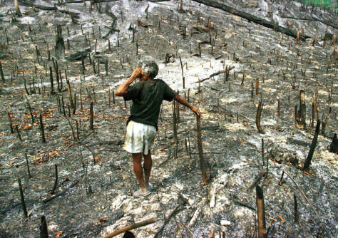 DEFORESTED AREA IN AMAZON