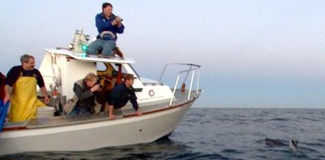 Image: Shark retreat