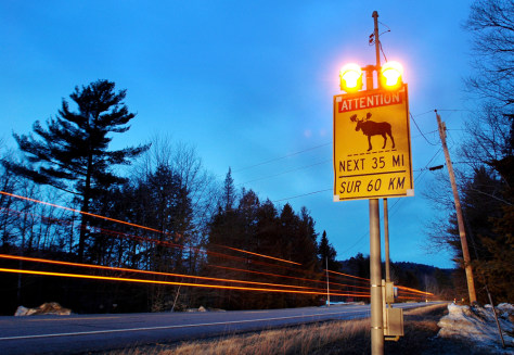 Flashing moose-crossing sign