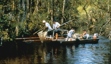 RESEARCHERS IN EVERGLADES SAMPLE FISH FOR MERCURY
