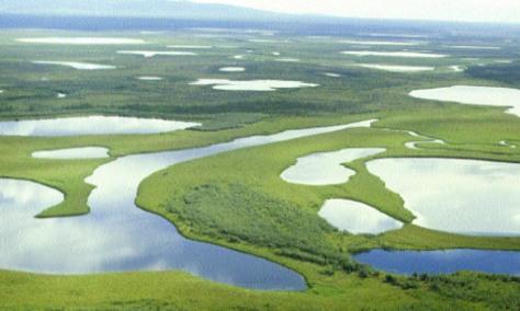 Image: Pleistocene Park