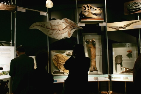 Image: Exhibit displays newest dinosaur fossils