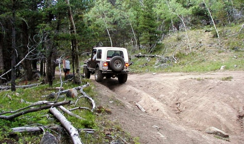 IMAGE: JEEP IN NATIONAL FOREST