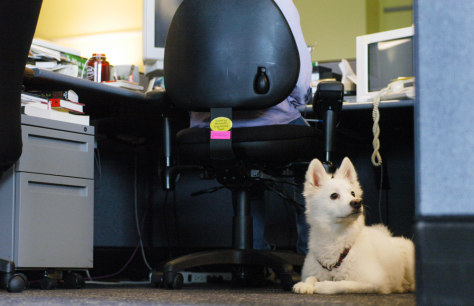 Image: Dogs in the office