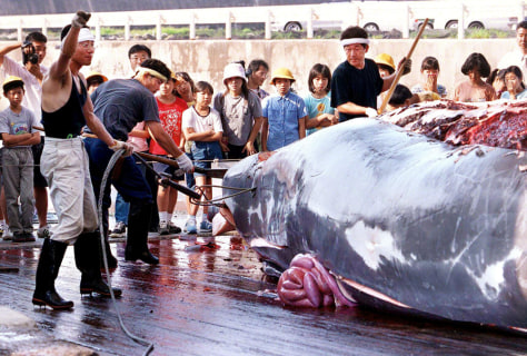 IMAGE: JAPANESE FISHERMEN CUT UP WHALE