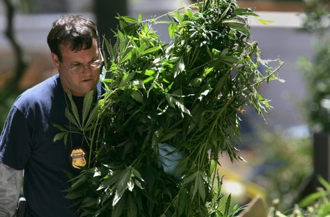 IMAGE: FEDERAL AGENT CARRIES CONFISCATED MARIJUANA PLANTS