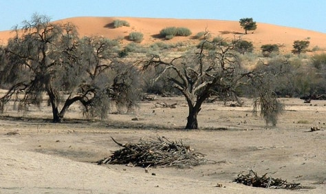 IMAGE: AFRICAN SAND DUNE AND TREES