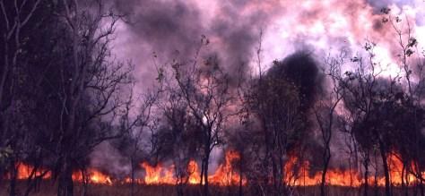 Image: Darwin fire