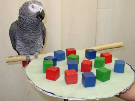 Image: Parrot and blocks