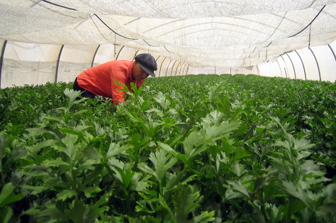Gaza settler gardening